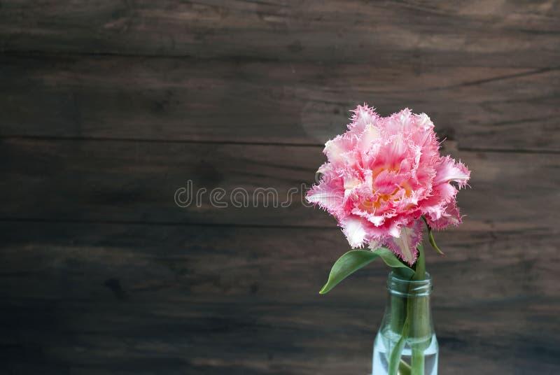 La primavera florece tulipanes rosados en florero foto de archivo