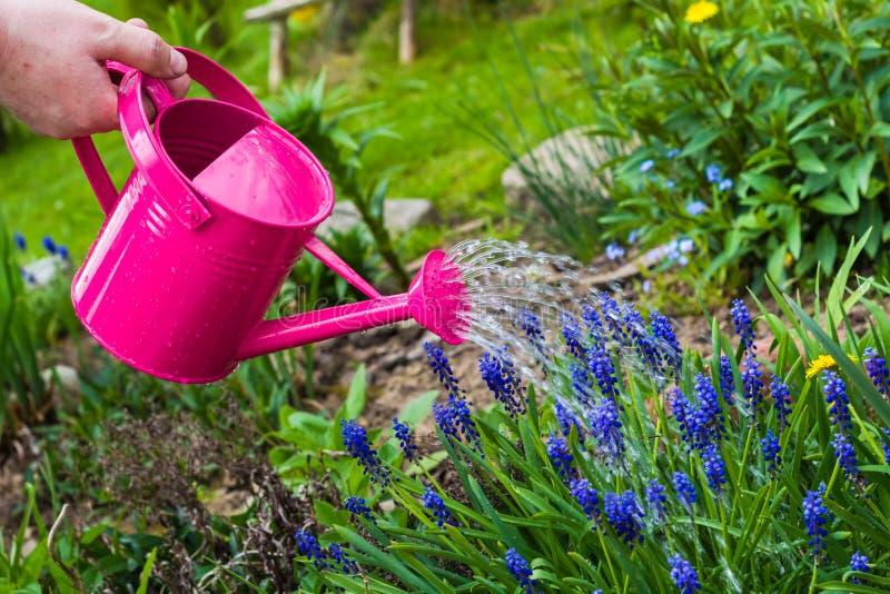 La primavera funciona la regadera de las plantas de riego for Preparacion de jardines