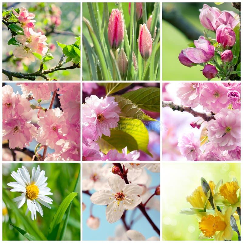 La primavera hermosa florece el collage imágenes de archivo libres de regalías
