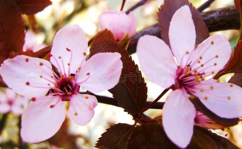 La primavera irrompe la Germania immagine stock libera da diritti