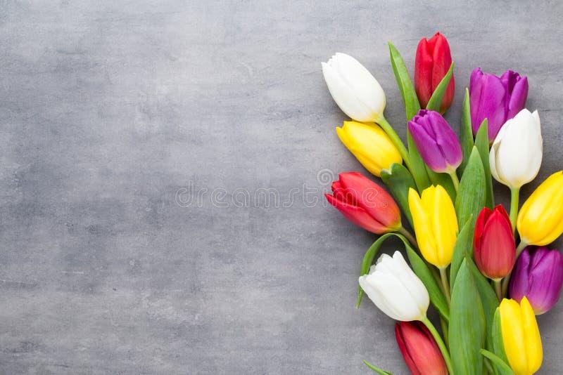 La primavera multicolora florece, tulipán en un fondo gris imagenes de archivo