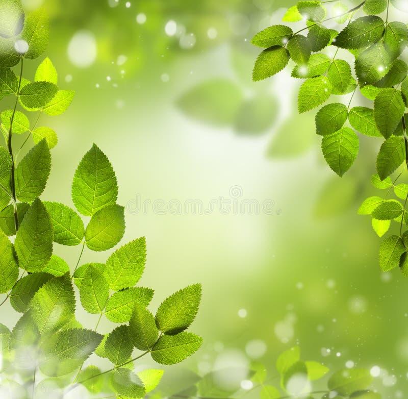 La primavera o il fondo astratto dell'estate con bokeh si accende. immagini stock