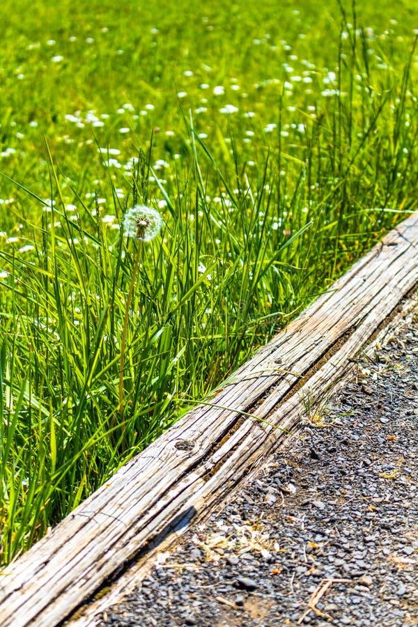 La primavera ? percorso verde venente della ghiaia fotografie stock