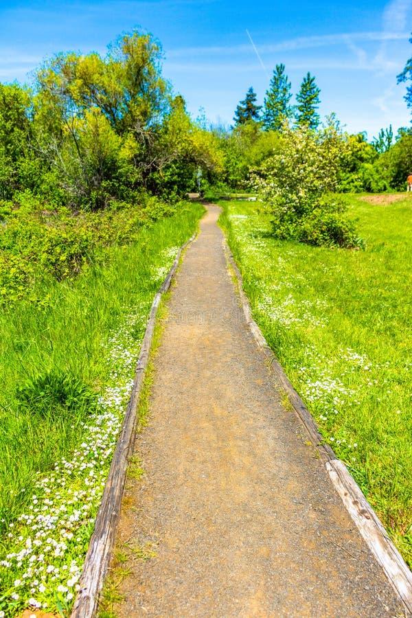 La primavera ? percorso verde venente della ghiaia immagine stock libera da diritti