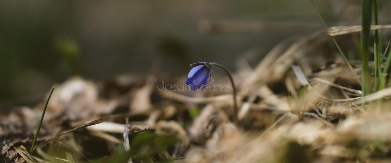 La primavera si sveglia fotografie stock