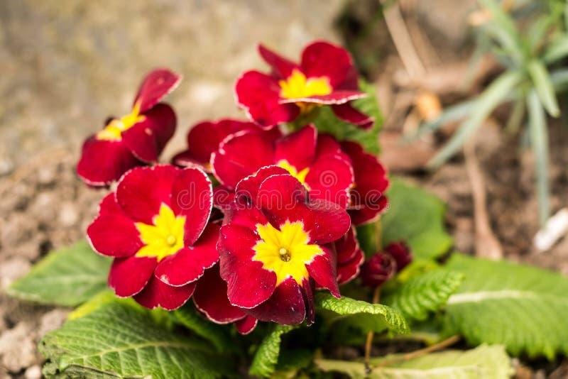 La primavera sta venendo fotografie stock