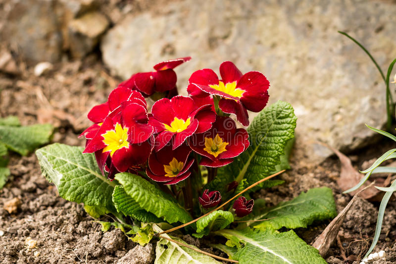 La primavera sta venendo fotografie stock libere da diritti