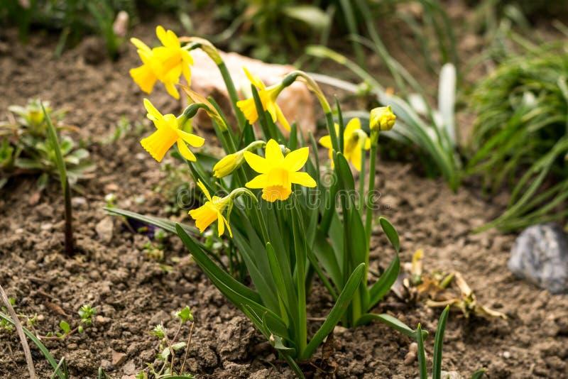 La primavera sta venendo immagini stock