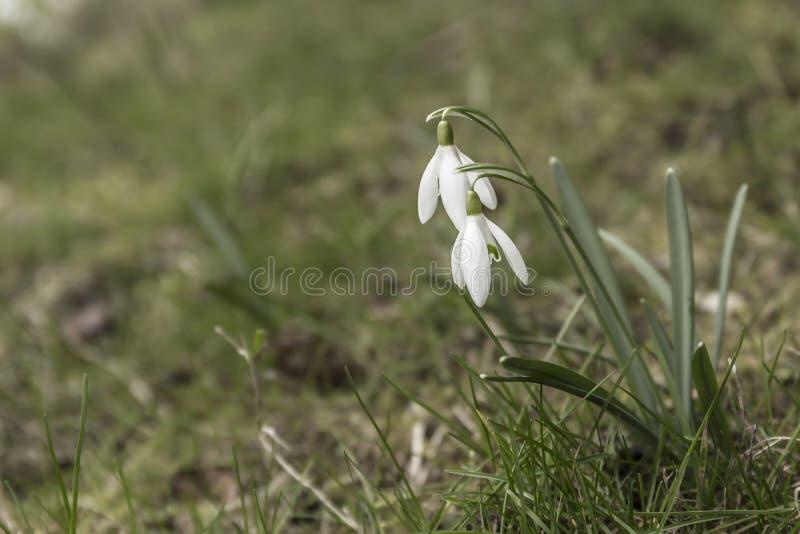 La primavera viene fotos de archivo libres de regalías