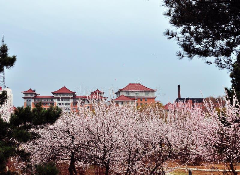 La primavera viene a la ciudad antigua foto de archivo