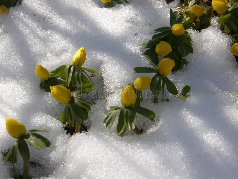 La primavera vino las primeras flores foto de archivo