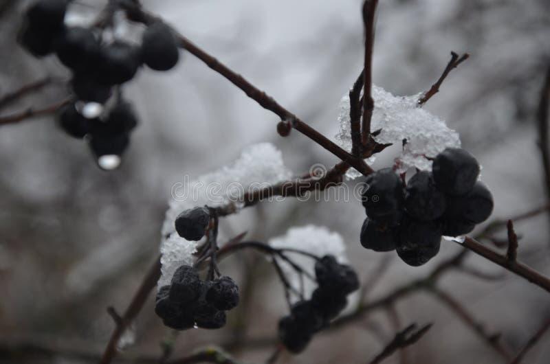 La primera nieve fotos de archivo libres de regalías