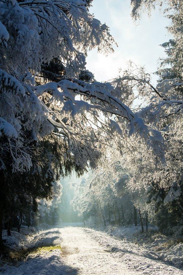 La primera nieve en el invierno fotografía de archivo
