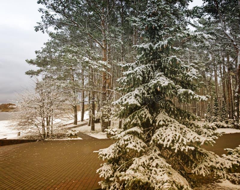 La primera nieve en invierno temprano en el parque fotos de archivo
