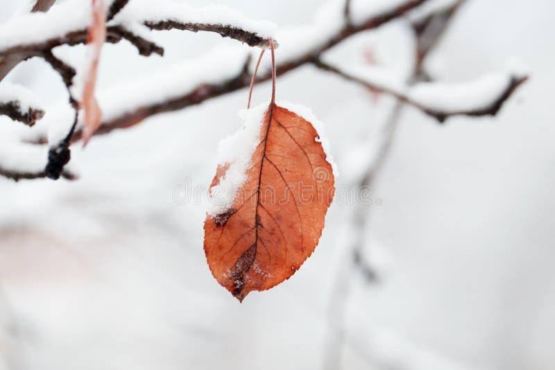 La primera nieve, escamas de la nieve cae, primer Rama hermosa con ora fotos de archivo