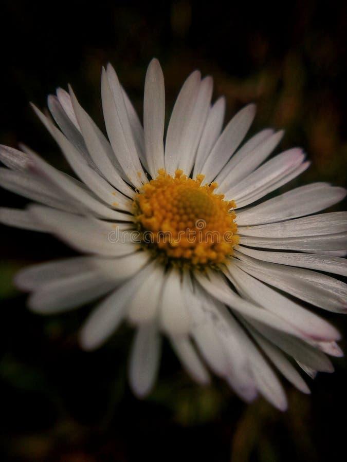 La princesa blanca de flores imagen de archivo