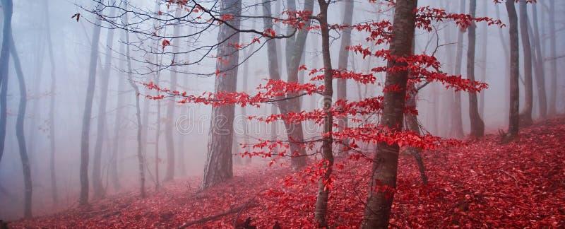 La profundidad baja del bosque brumoso del otoño del campo imagen de archivo