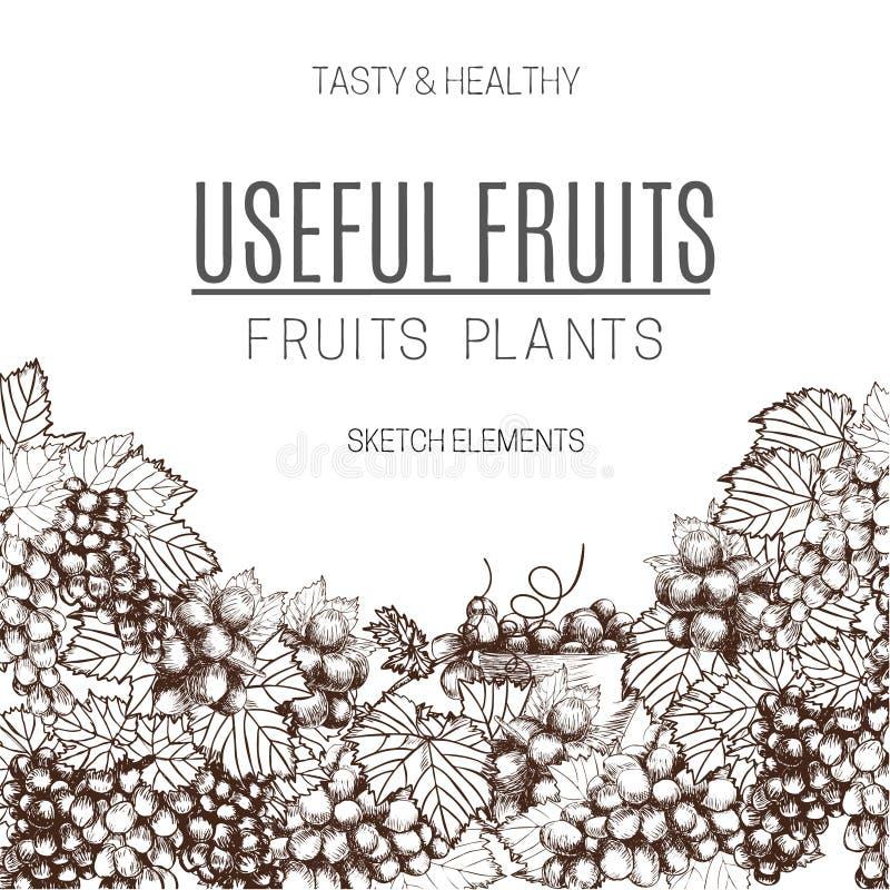 La progettazione delle uva da tavola schizza l'illustrazione di vettore di stile Vecchia imitazione dell'incisione Disegnato a ma royalty illustrazione gratis