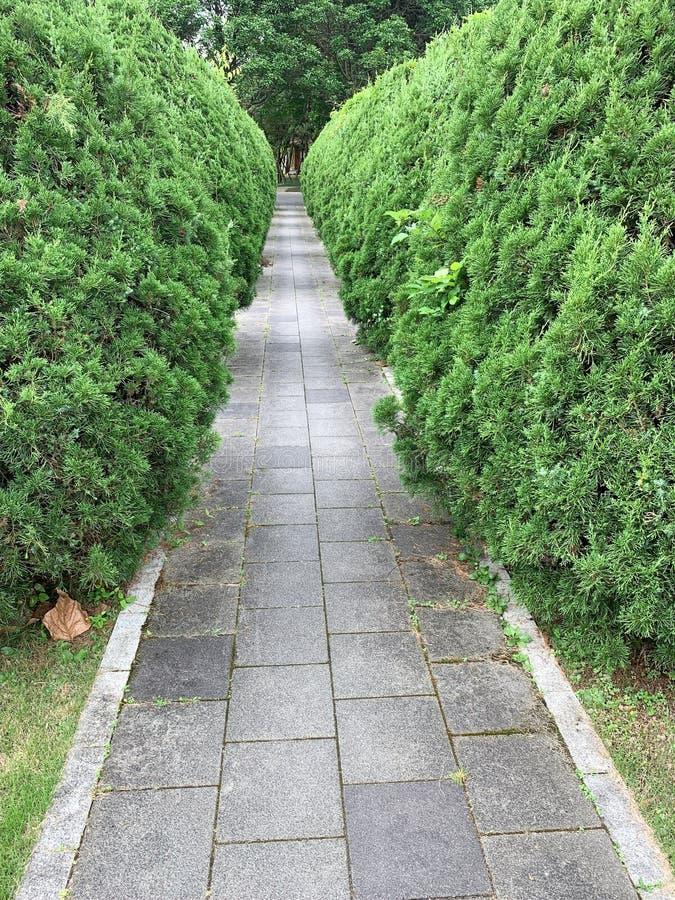 La promenade aux pierres tombales creusées d'arbustes de Coniferous dans le parc photos libres de droits