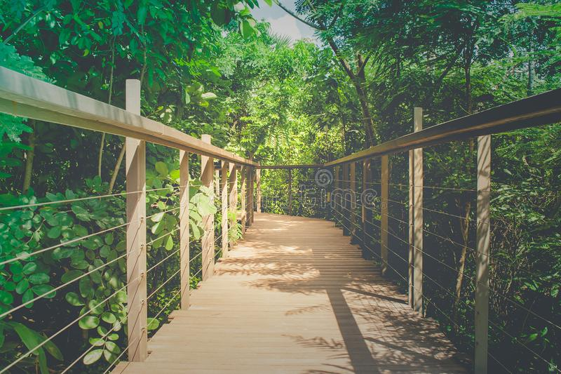 La promenade ou le passage couvert en bois de ciel croisent plus de la cime d'arbre entourée avec le fond vert naturel et de lumi photographie stock