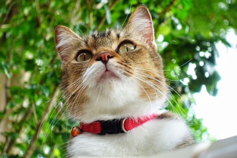 La prospettiva dell'animale domestico sveglio del gatto A fotografia stock