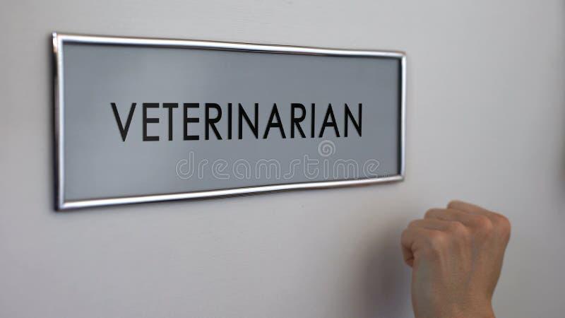 La puerta veterinaria del sitio, mano que golpea el primer, acaricia la atención sanitaria, doctor animal foto de archivo libre de regalías