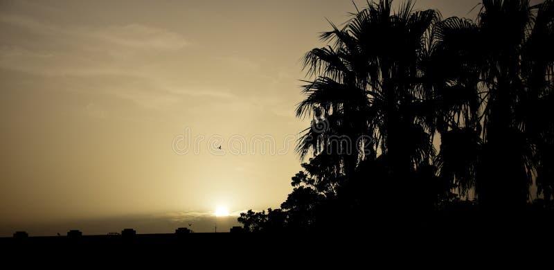 La puesta del sol con las palmeras y los pájaros en la Málaga costean imágenes de archivo libres de regalías