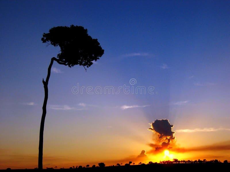 La puesta del sol del árbol del jorobado fotografía de archivo