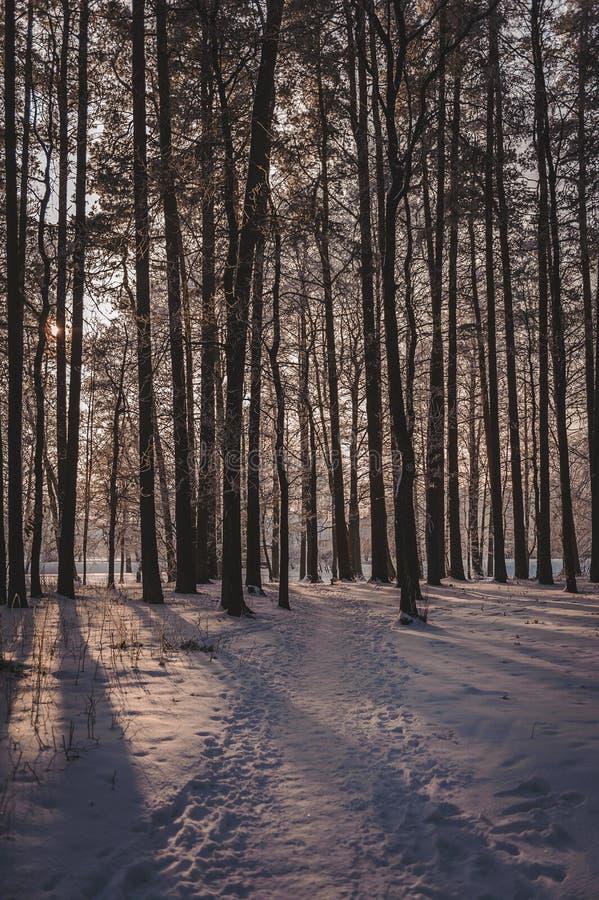 La puesta del sol en la madera entre los ?rboles filtra en per?odo del invierno Parque congelado en invierno debajo de la nieve fotografía de archivo libre de regalías