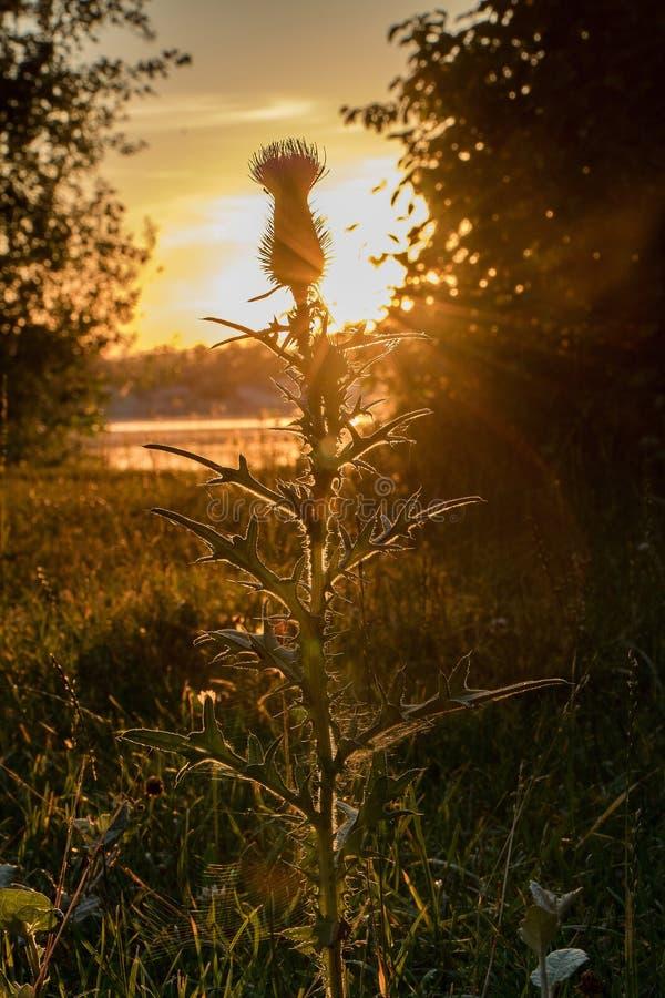 La puesta del sol encendido considera imagen de archivo