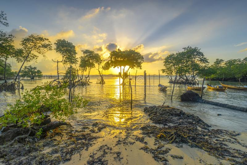 la puesta del sol entre los árboles del mangle fotos de archivo