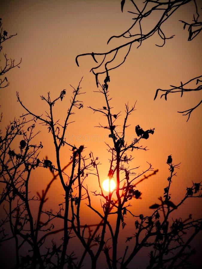 La puesta del sol hermosa con el árbol negro y el cielo wallpaper imágenes de archivo libres de regalías