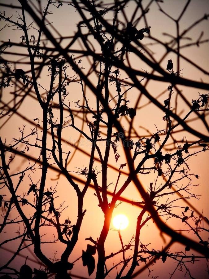 La puesta del sol hermosa con el árbol negro y el cielo wallpaper fotos de archivo libres de regalías