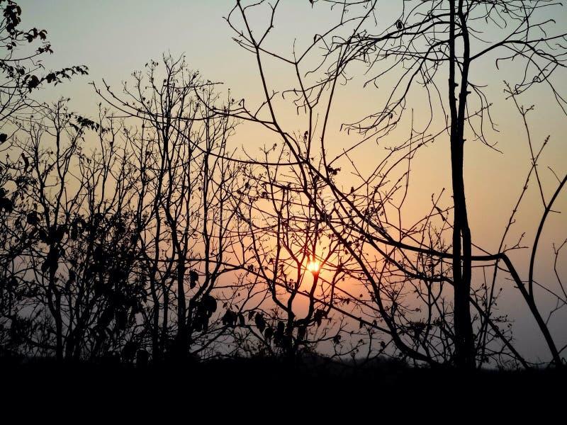 La puesta del sol hermosa con el árbol negro y el cielo wallpaper imagen de archivo
