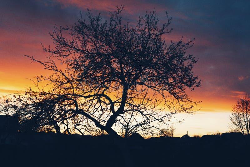 La puesta del sol pasada para este árbol viejo imagenes de archivo