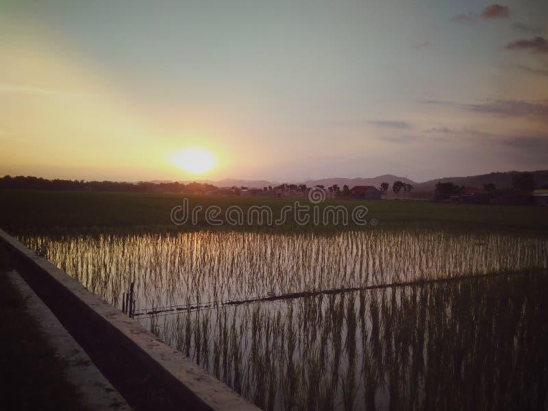 La puesta del sol por la tarde en el arroz coloca fotos de archivo libres de regalías