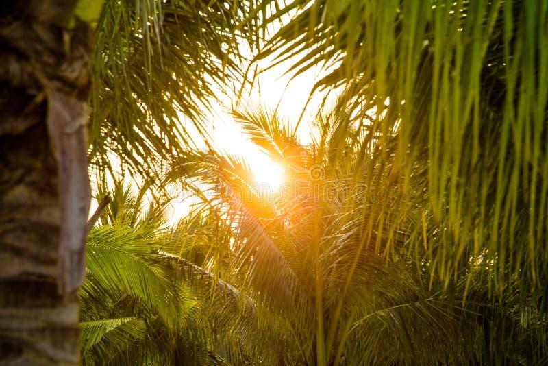 La puesta del sol que se rompe a través de las hojas en bahía larga de la ha imagen de archivo libre de regalías