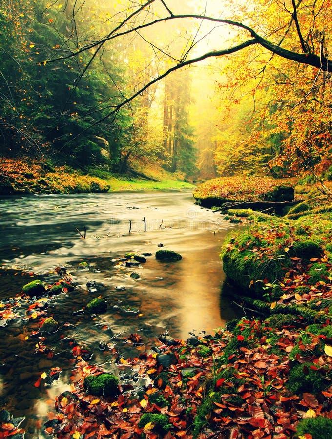 La puesta del sol sobre el río de la montaña cubierto por la haya anaranjada se va Ramas dobladas por encima de la superficie imagen de archivo libre de regalías