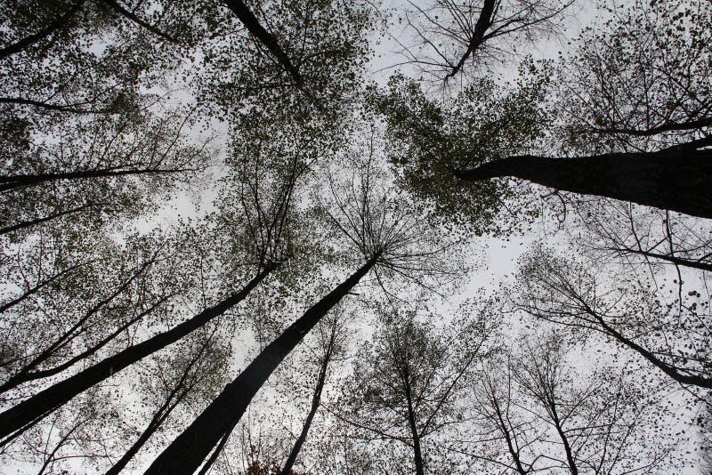 La puissance de la forêt image libre de droits
