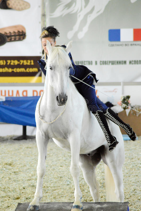 La puleggia tenditrice della donna in vestito blu scende il cavallo bianco Mostra internazionale del cavallo immagine stock libera da diritti