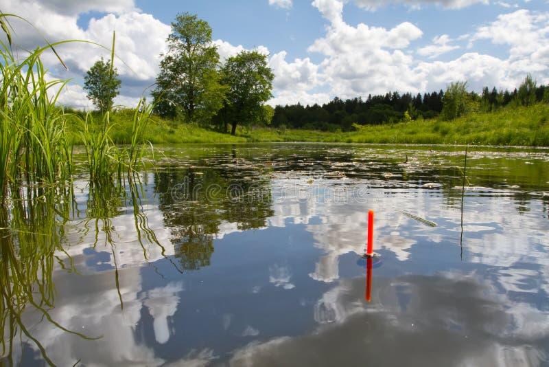 La punta del galleggiante da pesca si siede verticalmente nell'acqua del lago invaso con erba immagini stock libere da diritti