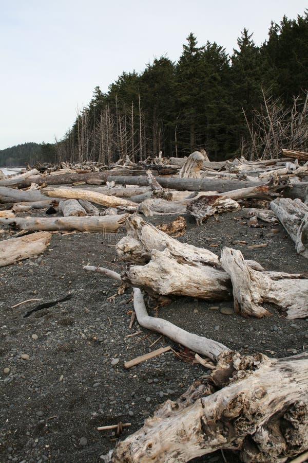 Download La Push Washington stock image. Image of rugged, beaches - 11743041