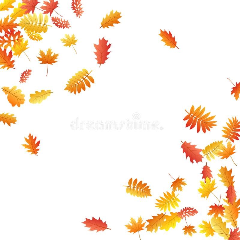 La quercia, acero, sorba selvaggia della cenere lascia il vettore, fogliame di autunno su fondo bianco illustrazione vettoriale