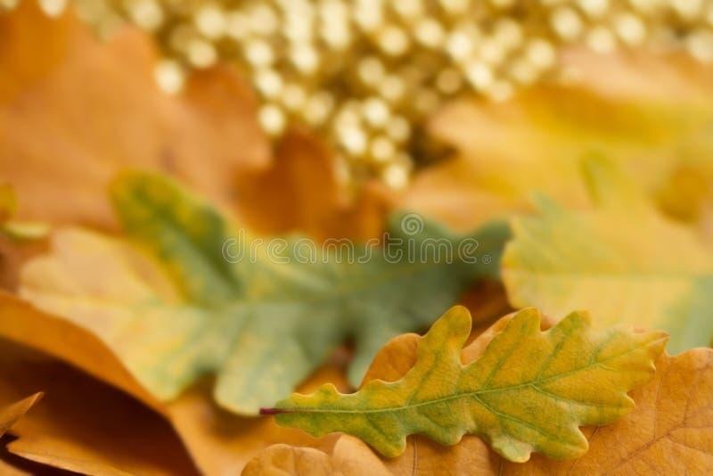 La quercia variopinta naturale lascia il fondo Priorità bassa di autunno immagini stock libere da diritti