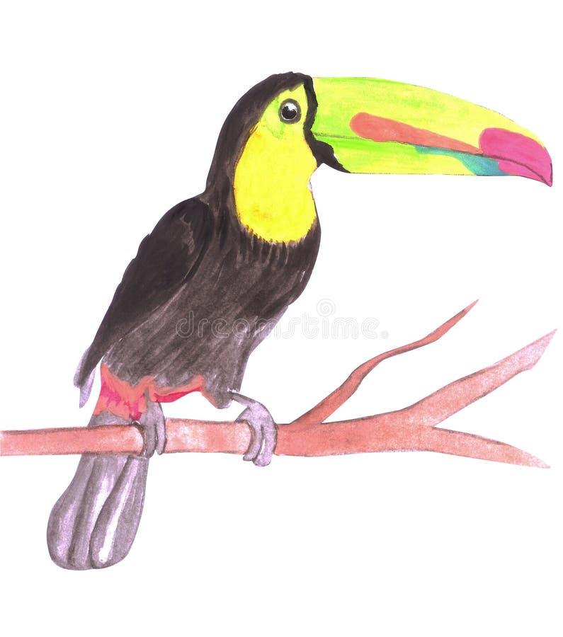 La quilla cargó en cuenta sulfuratus del tucán o del Ramphastidae aislada en blanco libre illustration