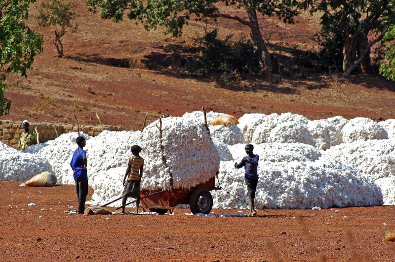 La récolte de coton photo libre de droits