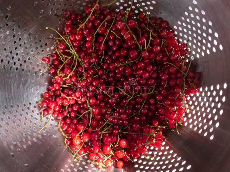 La récolte de groseille rouge a lavé des groupes de groseille rouge dans la passoire Vue sup?rieure, plan rapproch? photos stock