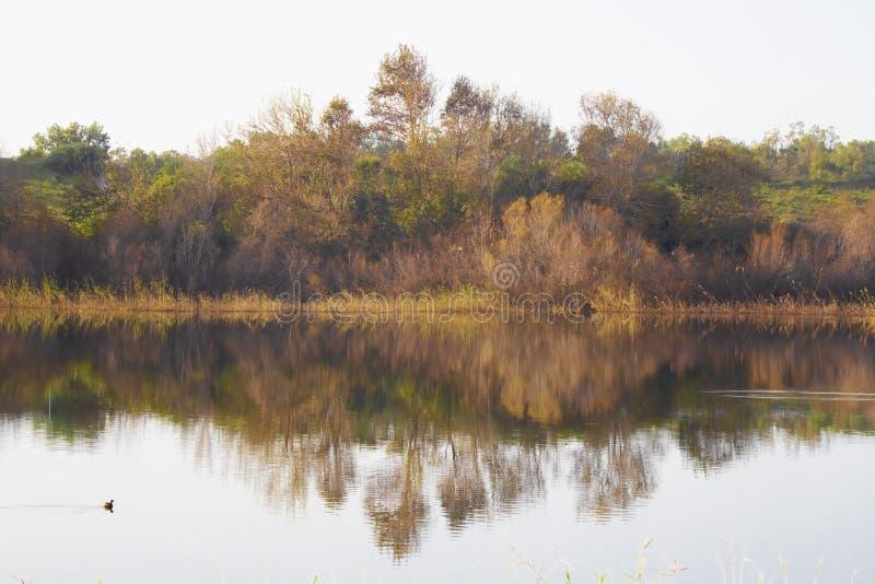 La réflexion dans l'eau des arbres et des buissons avec le feuillage d'automne image stock