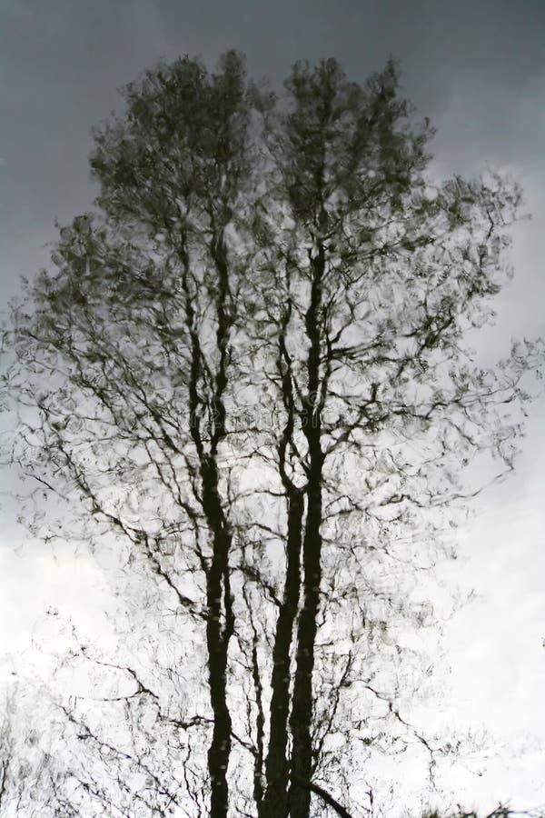 La réflexion de ondulation des troncs des arbres sur l'eau apprêtent photographie stock libre de droits