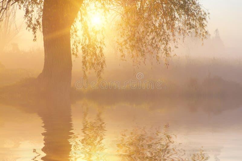 La réflexion des arbres sur le rivage au lever de soleil rayonne image libre de droits